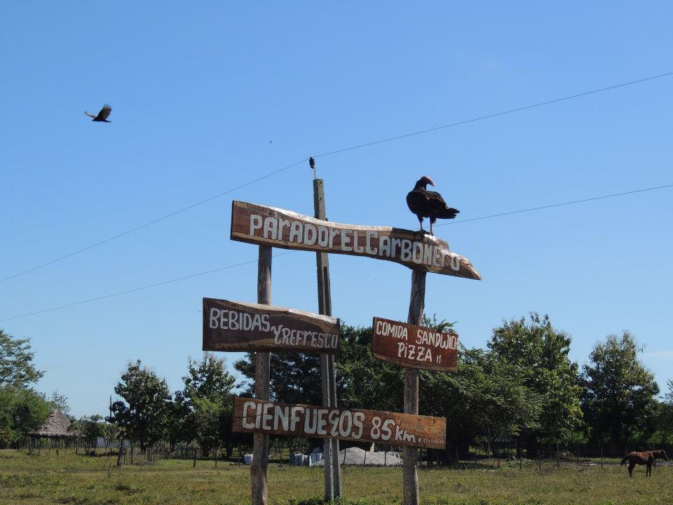 Deze roodkopgier spotten we halverwege onze route van Playa Larga naar Cienfuegos.