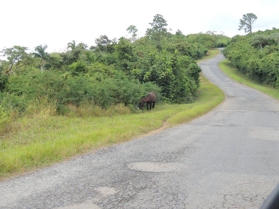 Kronkelweggetje op de route van Havana naar Vinales